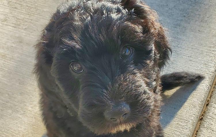 Lindas-puppy